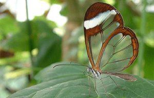 kelebekler-vadisi-kelebekleri
